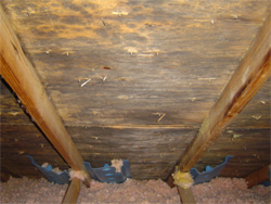 Vero Beach home inspection and what to do if mold is found.