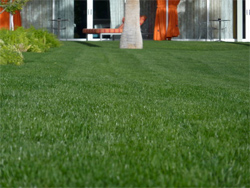 Here are 5 tips for getting your Suffolk County NY yard in shape to take on the summer weather